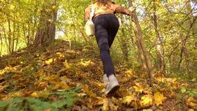 Brunetki dziewczyna wycieczkuje w pogodnych jesieni drewnach w brown kurtce Wspinaczkowy ciężki 4K steadicam wideo zdjęcie wideo