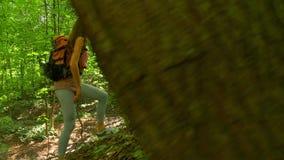 Brunetki dziewczyny wycieczkować ciężki w pogodnym lasu 4K steadicam strzale zdjęcie wideo