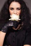 το brunette μαγνητικό αυξήθηκε λ& Στοκ Εικόνες