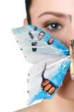 Brunette de ojos azules con una mariposa Foto de archivo libre de regalías