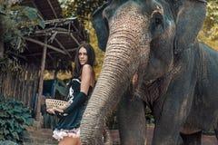 Brunette elephant trainer feeding her pet. Brunette elephant trainer feeding her friendly pet Stock Image