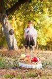 Brunette girl with basket of ripe apples Stock Image