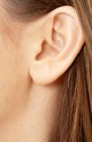 Brunette girl ear. Color closeup picture of brunette girl ear royalty free stock photo
