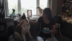 Brunette girl with husky on the sofa stock video