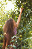 Brunette girl reaches green apple on tree at sunny day Stock Photo