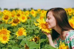 Brunette girl sniffing a sunflower in the field stock image