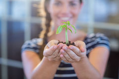 Brunette holding green sprouts Royalty Free Stock Photo
