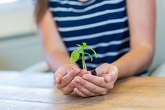 Brunette holding green sprouts Royalty Free Stock Photos