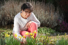 Brunette mature woman in her garden with daffodils Stock Photos