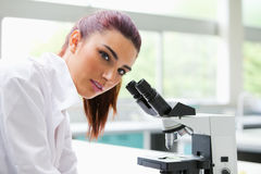 Brunette posing with a microscope. While looking at the camera Stock Images