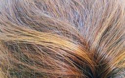 Brunette& x27; s włosy zakończenie up Fotografia Stock