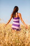 Brunette sexy girl in short dress at wheat field Royalty Free Stock Image