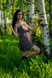 Brunette stands near the birch in forest. Stock Photos