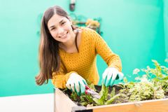 Brunette Taking Care Of Urban Garden. Good looking woman smiling while trimming plant with pruning shears in garden royalty free stock image