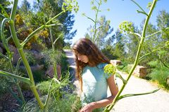 Brunette teen girl in Mediterranean track. With fennel plants royalty free stock images