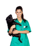 Brunette vet with a pug dog Stock Photography