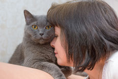 Brunette woman with a British cat Royalty Free Stock Photos