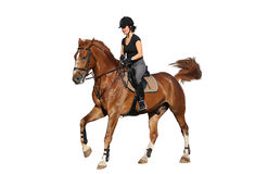 Brunette woman cantering on chestnut horse isolated on white Stock Photography