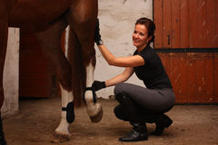 Brunette woman dressing horse in fetlock boots Stock Images