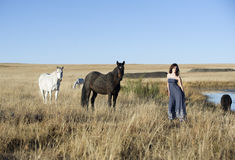 Brunette woman in field standing next to horses stock images