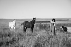 Brunette woman in field standing next to horses royalty free stock images