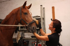 Brunette woman grooming brown horse for the riding Stock Photos