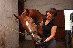 Brunette woman grooming brown horse for the riding Stock Photo