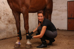 Brunette woman putting tendon boots on horse legs Stock Photo