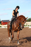 Brunette woman riding trotting chestnut horse Royalty Free Stock Photography