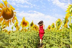 Brunette woman running in sunflower field royalty free stock photos
