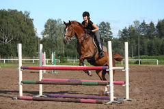 Brunette woman show jumping on brown horse Royalty Free Stock Image