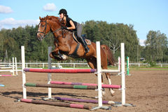 Brunette woman show jumping on brown horse Royalty Free Stock Photos
