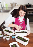 Brunette woman working with  seedlings Royalty Free Stock Photography