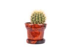 brunissez le flowerpot de cactus Photographie stock libre de droits