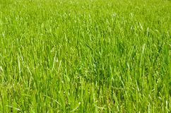 Brunn-ansad lawn arkivbilder