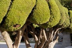 Brunn klippte trädgårds- buskar Royaltyfri Fotografi
