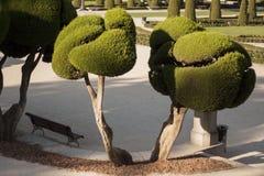 Brunn klippte trädgårds- buskar Fotografering för Bildbyråer