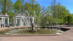 Brunnen ` Adam-`, sonnig Maifeiertag Peterhof stock video footage
