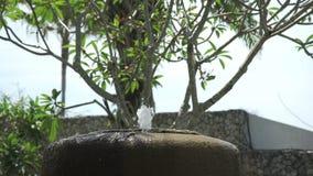 Brunnen des dekorativen Steins im Hotel bei Bali stock video