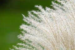 Brunnen-Gras-Hintergrund Lizenzfreie Stockfotografie