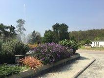 Brunnen mit Blumen stockfotografie