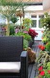 Den moderna terrassen med en radda blommar och den roliga katten Royaltyfria Bilder