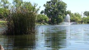 Brunnen und Schilfe stock footage