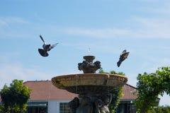 Brunnen und Vogel Stockfotografie