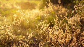 Brunnengras mit einem schönen auf Sonnenunterganghintergrund lizenzfreies stockbild