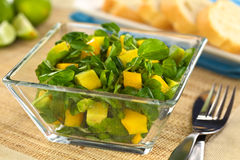 Brunnenkresse-Mangofrucht-Avocado-Salat Lizenzfreies Stockbild