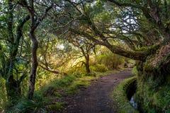 Brunnenwanderweg Levada 25 auf Madeira-Insel Lizenzfreie Stockfotos