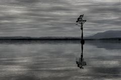 brunner湖新的唯一结构树西兰 库存照片