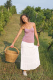 Brunnette girl in vineyard working on grape harvest with big wic Stock Image