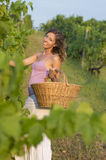 Brunnette girl in vineyard working on grape harvest with big wic Royalty Free Stock Photos